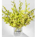 Green Orchids in Vase