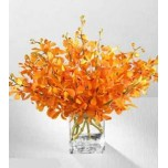 Orange Mokara Orchids in Vase