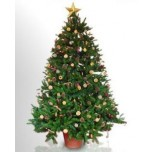 Christmas Tree - Natural