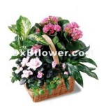Pink Plant Assortment