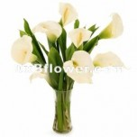 Calla lilies with Vase