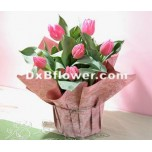 Tulips Small Bouquets